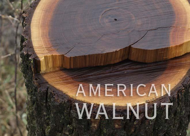 American Black Walnut