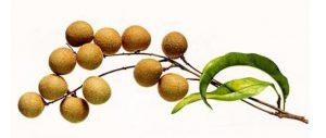 longyan fruit
